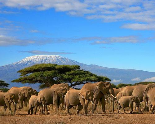 Elefanten besuchen