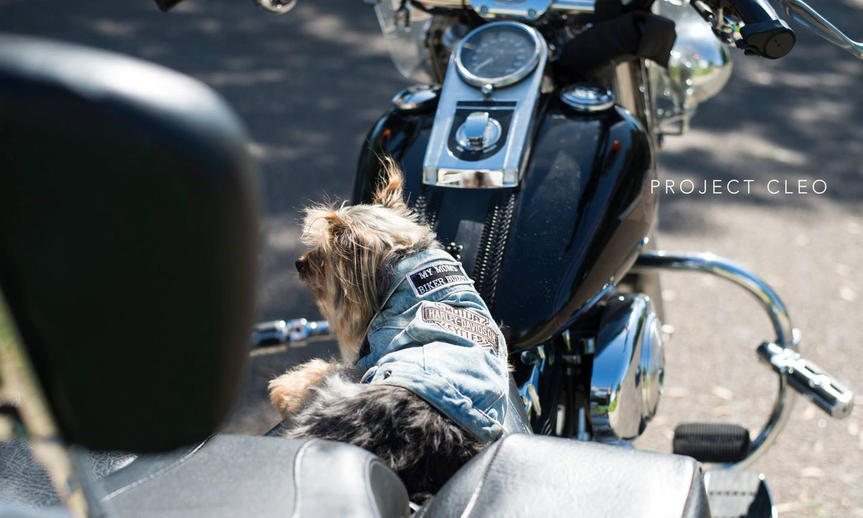 """Vor allem an diese Fotosession kann Hagel sich noch gut erinnern: """"Ich möchte euch allen """"Shorty"""" vorstellen. Er ist mit seiner Mama auf ihrem Motorrad gefahren, seit er ein Welpe ist. Mittlerweile leidet er unter Demenz, aber das hier ist die eine Sache, die er richtig liebt, und er wird richtig aufgeregt, wenn er wieder fahren darf"""", schrieb sie als Erklärung unter das Bild."""