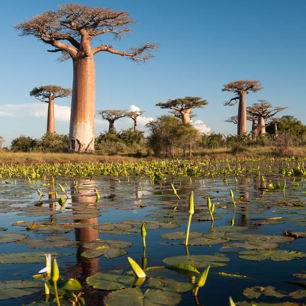 Madagaskar: Baobabs