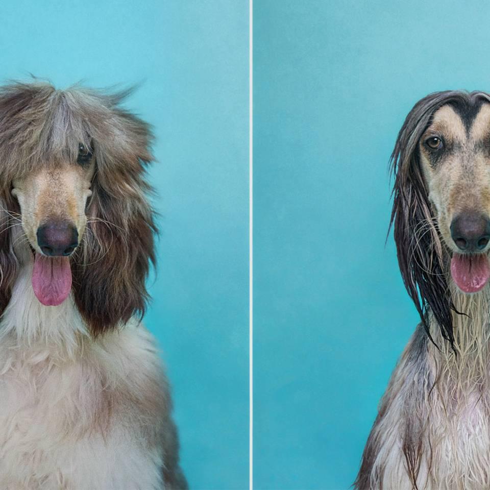 Vor und nach der Wanne: Diese Hunde haben die Haare schön!
