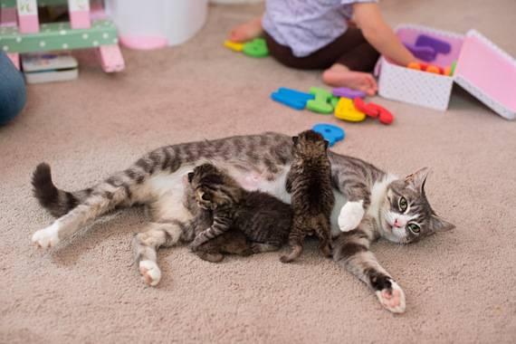 Tierliebe: Welch wunderbare Wendungen das Leben doch nehmen kann: Nachdem Katzenmutter Mikey ihre drei Katzenbabys nach kurzer Zeit verlor, war sie untröstlich. Das arme Tier llitt so sehr, dass es ihrer Besitzerin Hillary das Herz brach. Aber ein erstaunlicher Zufall sorgte für ein glückliches Ende: Hillary stieß auf drei Katzenbabys, die kurz vorher ihre Mutter verloren hatten. Adoptivmama und Adoptivkätzchen hatten keine Berührungsängste und sind mittlerweile unzertrennlich.