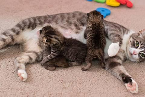 Rührendes Happy-End: Diese Katze trauert um ihre verstorbenen Kinder - doch dann ...