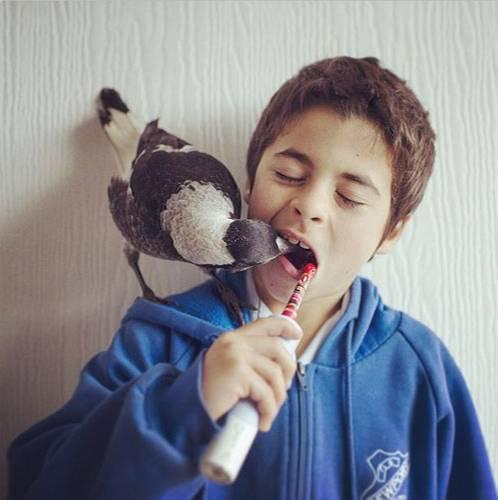 Tierliebe: Hund, Katze, Hamster: Viele Kinder träumen von einem Haustier. Noah Bloom aus Australien hat ein ganz besonderes: die Elster Penguin.
