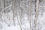Weißer Mann im Wald