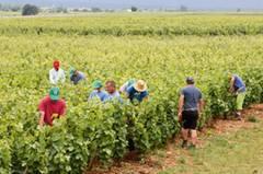Die kostbarsten Äcker der Welt zwischen Beaune und Dijon