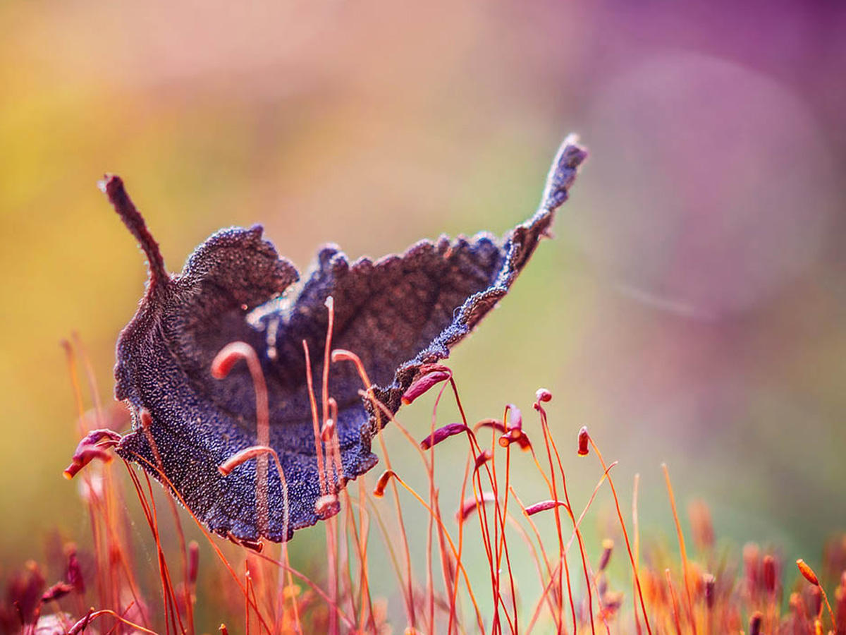 Natur im Herbst: Jahreszeit voller Magie und Schönheit