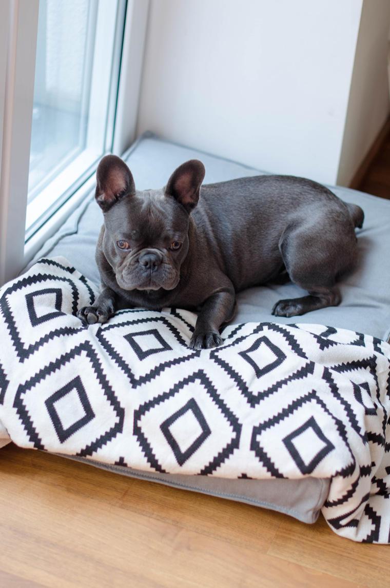 tierliebe blogger und ihre hunde. Black Bedroom Furniture Sets. Home Design Ideas