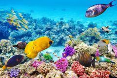 1) Great Barrier Reef, Australien