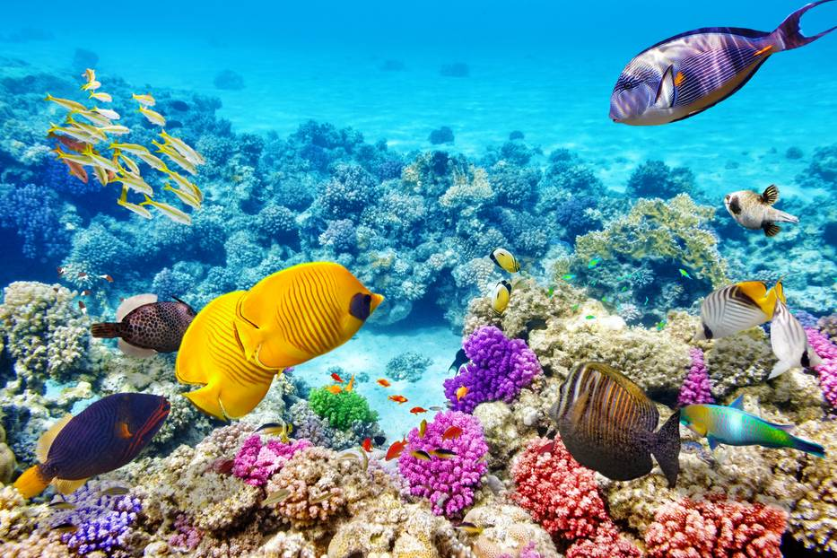 1) Great Barrier Reef, Australien