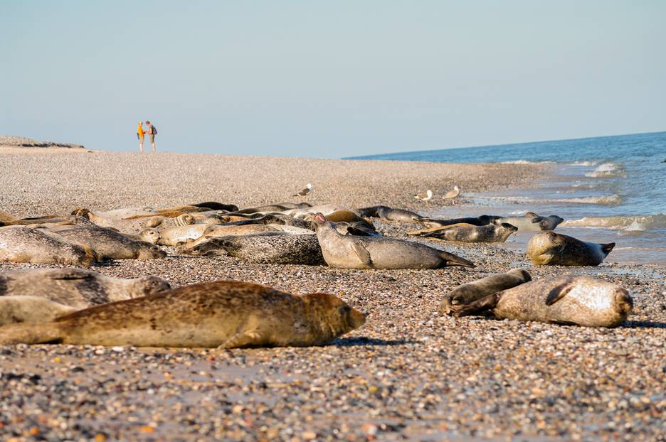 Helgoland: Badedüne