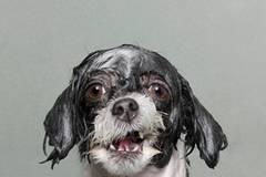 Nasse Hunde: bedröppelt und unfassbar süß!