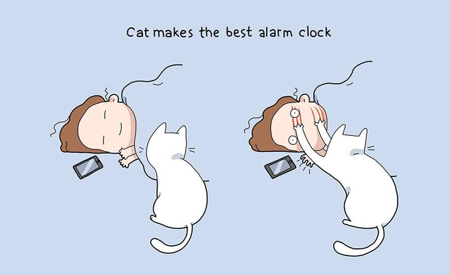 Wer eine Katze hat, braucht keinen Wecker mehr.