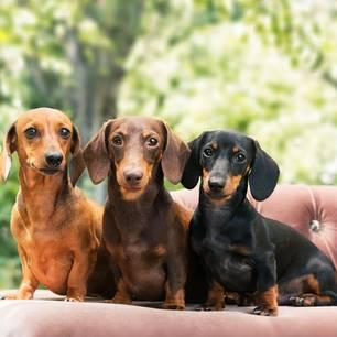 Tiere: Die 30 beliebtesten Hundenamen   BRIGITTE de
