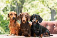 Die 30 beliebtesten Hundenamen