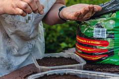 Etwas Saatgut in eine Hand nehmen, Samen herauspicken und diese über die Fläche verteilen (sie sollen etwa 2 cm Abstand haben).