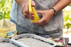 Die Aussaat leicht andrücken, mit etwas Vogelsand abdecken und kräftig anfeuchten, ohne die Samen wegzuspülen.