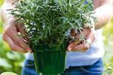 Vor dem Umpflanzen die Töpfe in Wasser tauchen, bis keine Luftblasen mehr aufsteigen. Dann ist der Wurzelballen ausreichend gewässert.