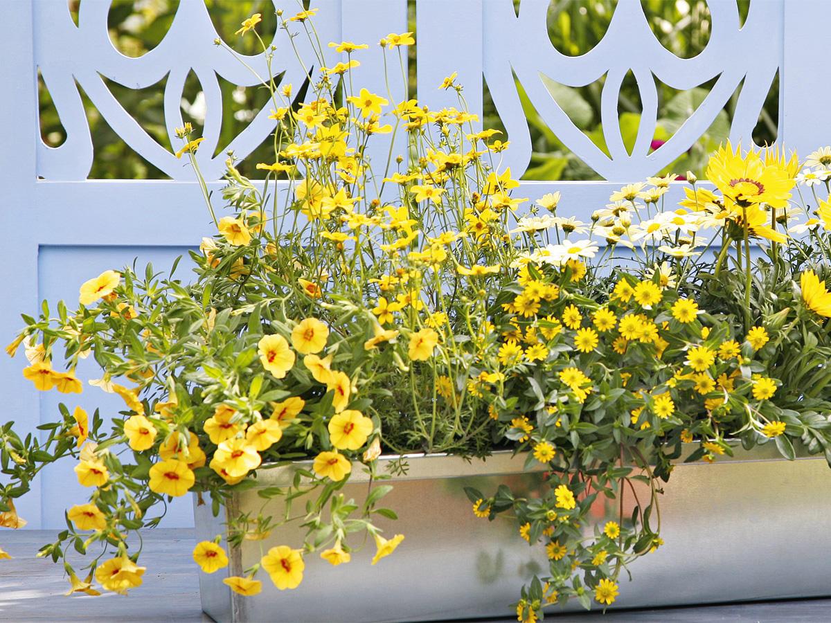 Neue Heimat: Wie Sie Blumen gekonnt eintopfen