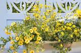 Prachtstück! Blumenarrangements wirken am schönsten, wenn man Pflanzen unterschiedlicher Struktur und Höhe kombiniert - und dieser Mix aus aufrechten Sommerblumen und Sorten mit rankenden Trieben ist ein Traum!