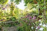 """Die Waldrebe Clematis viticella """"Walenburg"""" überspannt den Pfad zum Pavillon, der sich in einer Ecke des Gartens hinter blühendem Eisenkraut (Verbena bonariensis) verbirgt. Fichtenhäcksel dämmt als Mulch die Flut der Unkräuter auf den Wegen ein"""