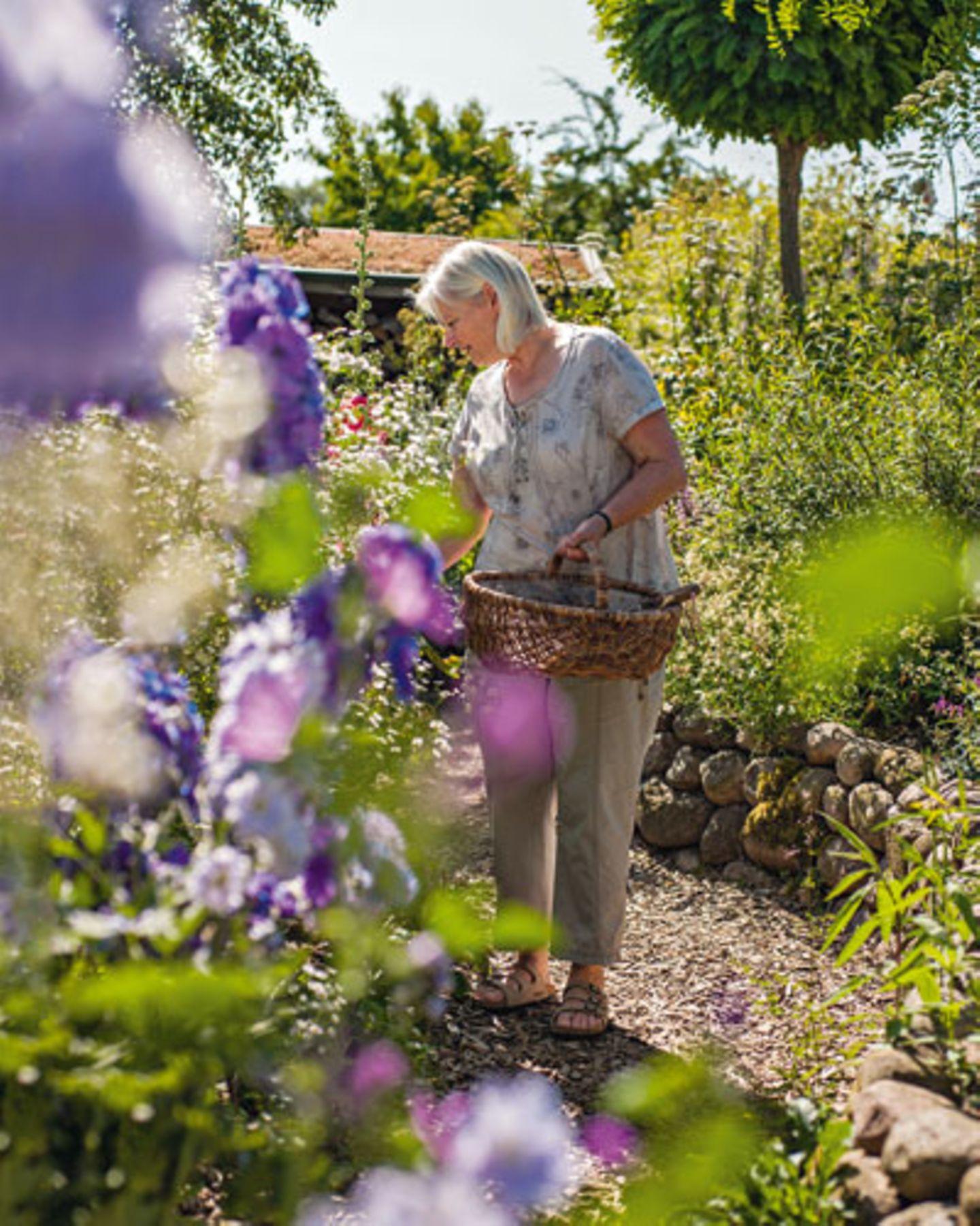 """Trompetenbäume und Scheinakazie bilden mit ihren kugeligen Kronen das """"Gerüst"""" in der Architektur des Gartens"""