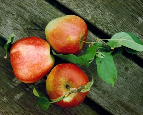 Beauty-Food: Äpfel