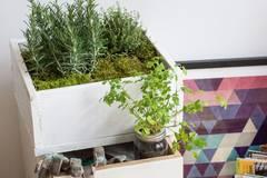 Indoor-Gardening - Platz für Grünes ist in der kleinsten Wohnung