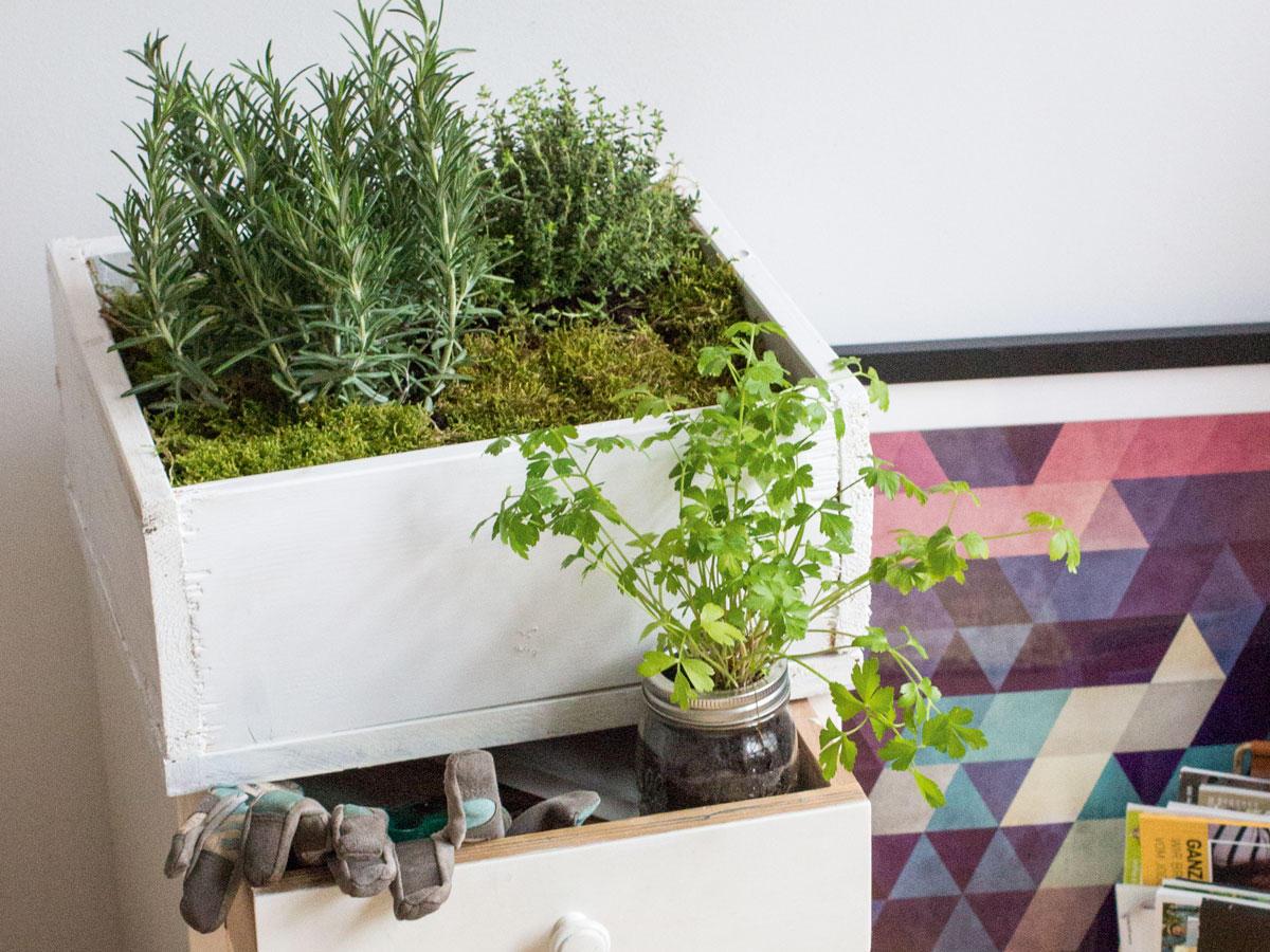 So verwandelst du deine Wohnung in einen Indoor-Garten