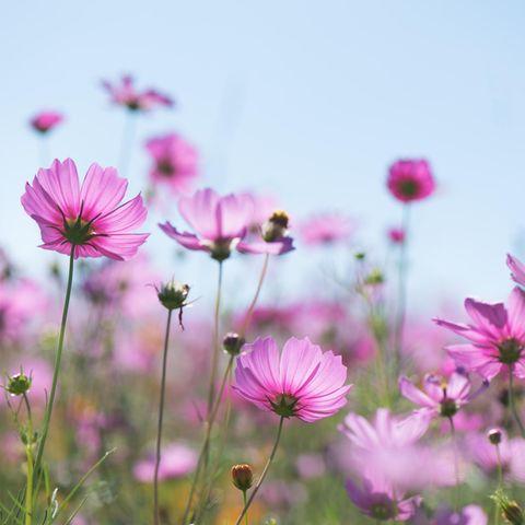 Pinke Blumen auf Wiese