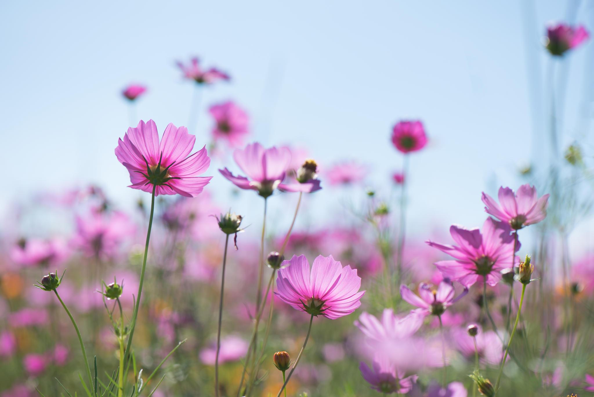Das Blumen-Quiz