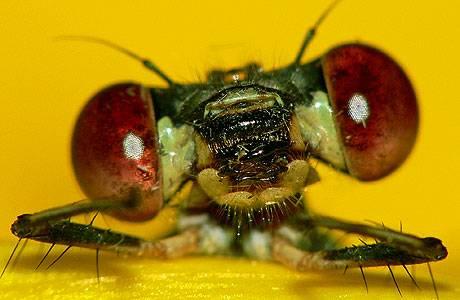 Wissenstest: Insekten: Das große Krabbel-Quiz