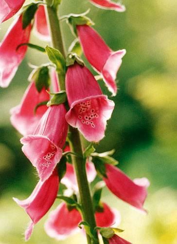 Pflanzen-Wissen: Welche Pflanze ist das?