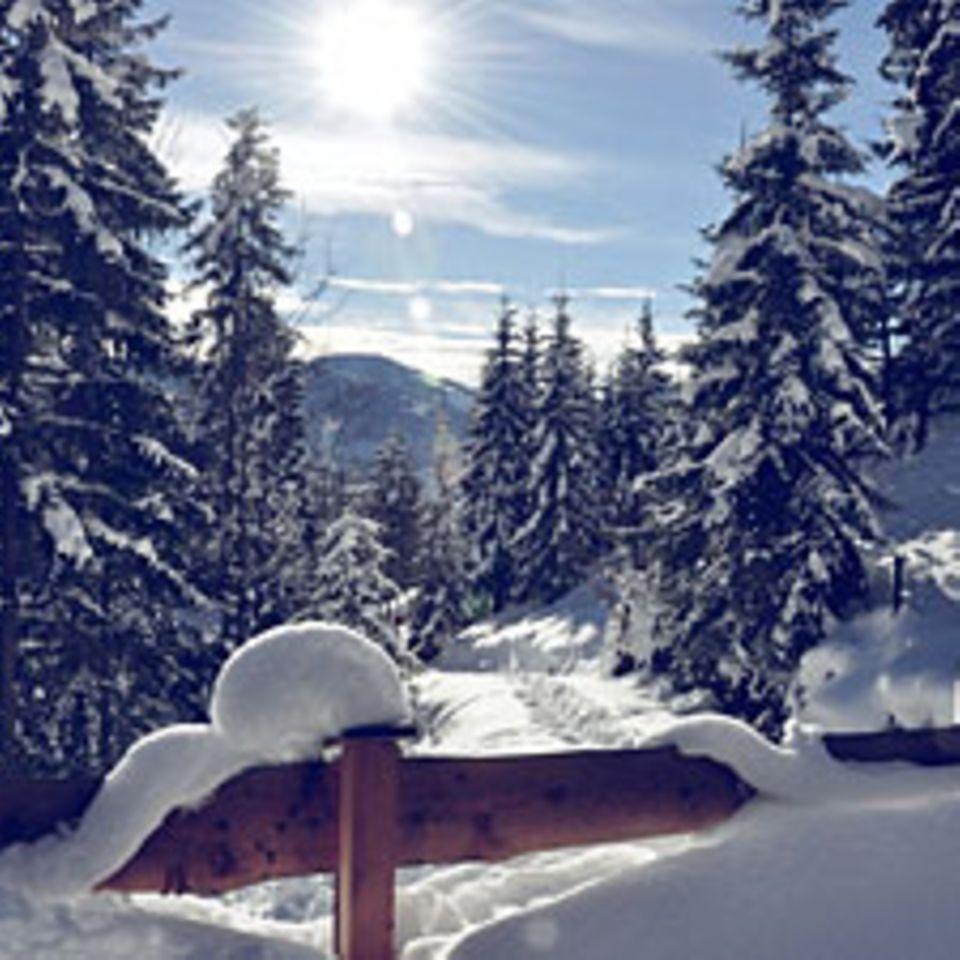 So viel Schnee- mit so einer weißen Überraschung hat dieser kleine Spatz wohl nicht gerechnet!