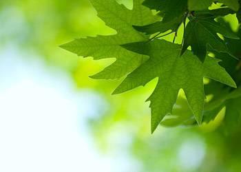 Wissenstest: Erkennen Sie die Baumarten?