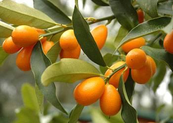 Wissenstest: Bilderquiz: Wie gut kennen Sie exotische Früchte?