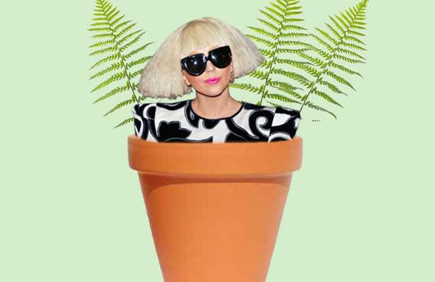 Wissenstest: Prominente Namenspaten: Gaga-Farn und Präsidenten-Flechten