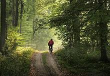 Ausflugstipps: Ein Wochenende im Wald