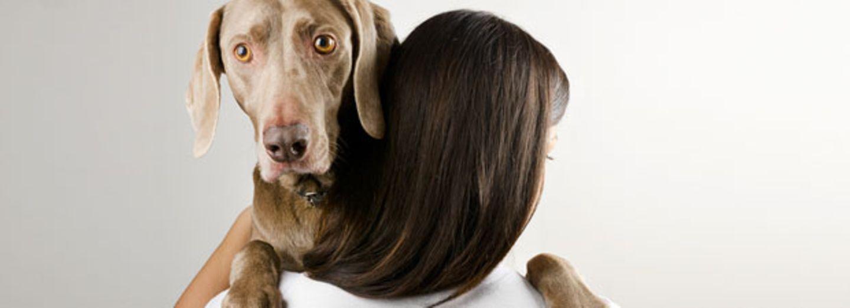 Warum Hunde es hassen, umarmt zu werden