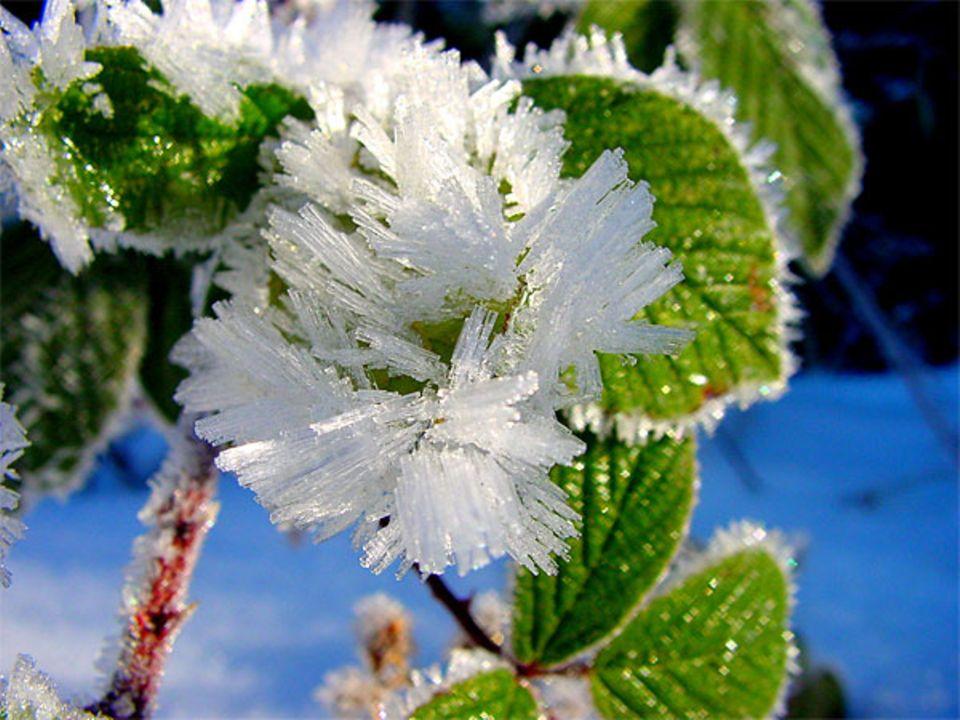 Winterwunderland: Die schönsten Bilder