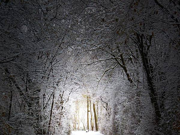 Fotowettbewerb: Winterwunderland: Die schönsten Bilder