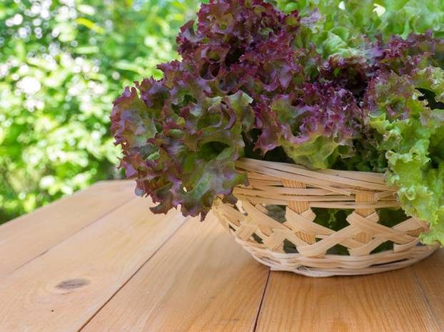 frisch aus dem topf urban gardening das beste gem se f r balkon fensterbank. Black Bedroom Furniture Sets. Home Design Ideas