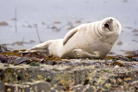 Tierisch witzig: DAS sind die lustigsten Tierfotos des Jahres 2015!