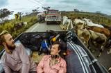 """Zum Bild: Bequem und mit guter Aussicht - Cozy und Jo stecken im equadorianischen """"Stau""""."""