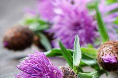 Mediterrane Diät: Lila schottische Diestel