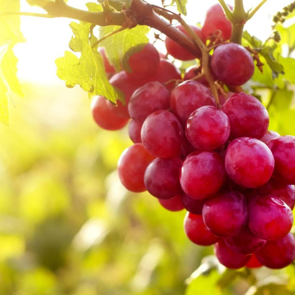 Fettverbrenner: 9 Lebensmittel, die den Stoffwechsel anregen