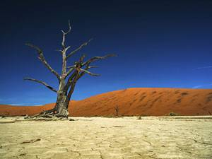 Wissenstest: Das Namibia-Quiz