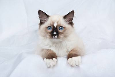 Haustiere: Das Katzen-Quiz