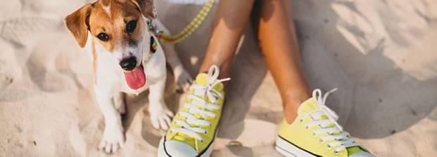 Haustiere: Test: Welcher Hund passt zu mir?