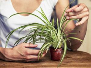Welche Zimmerpflanze passt zu mir?