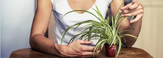 Pflanzen: Welche Zimmerpflanze passt zu mir?